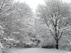 Snow_4111d