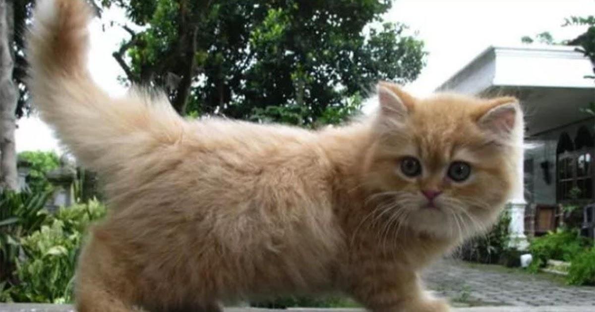 Nama Nama Jenis Kucing Ras 81021 Nama Untuk Kucing Comel Lucu Dan Unik