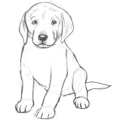 pencil drawing   puppy kid cartoonists  bob weber