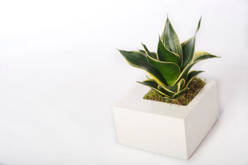 Modern Concrete Planters by Kevin Wood - Design Milk