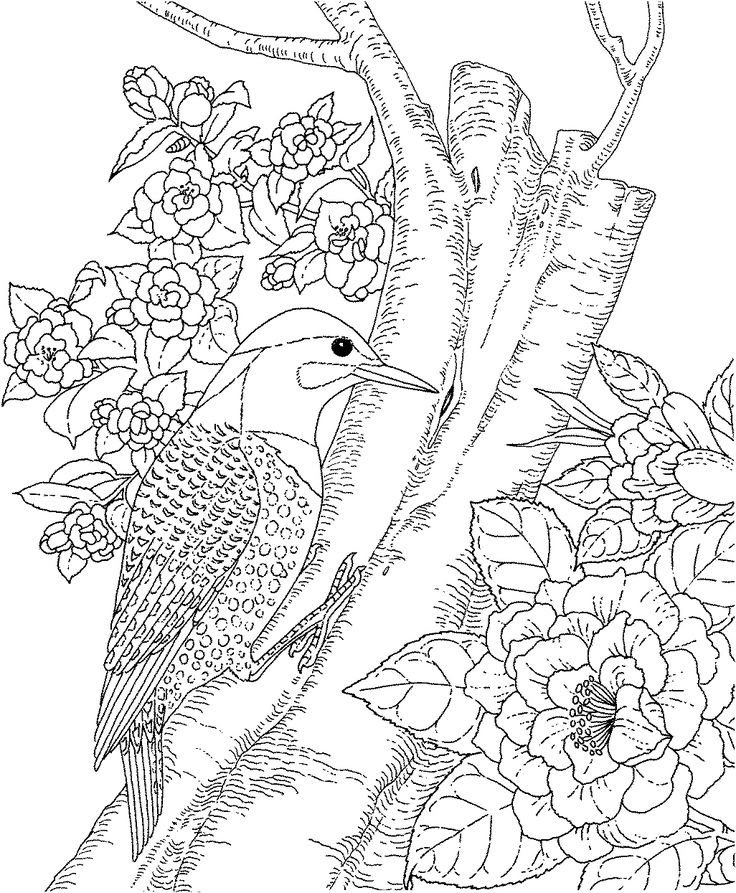 Print and Color Amazon Parrot Coloring Pages Adult Coloring Hard ... | 893x736