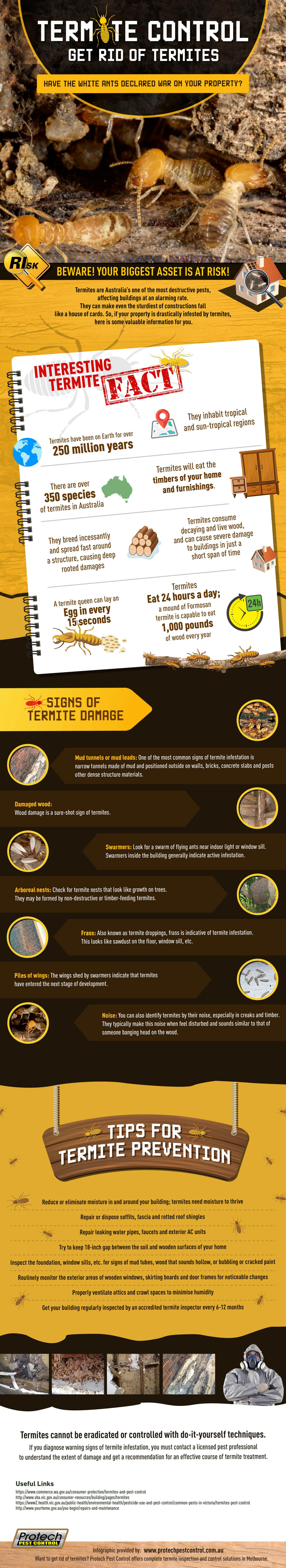 Termite Control: How to Get Rid of Termites