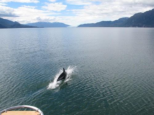 Seno Eyre dolphin escort