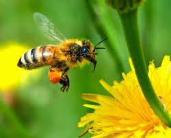 καναδάς-μελισσοκόμοι-αποζημίωση