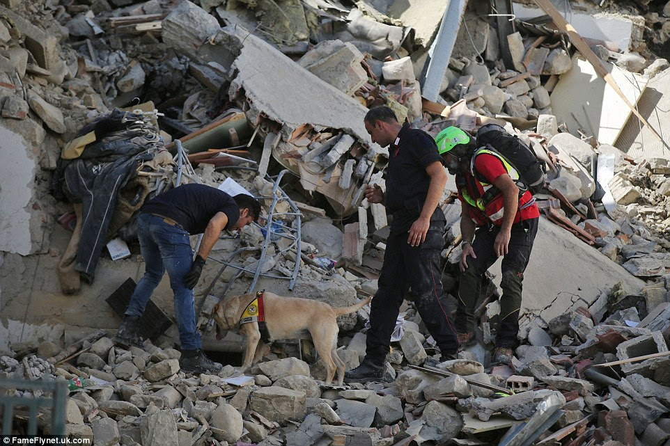Search: A sniffer dog is used to seek out any survivors under a collapsed building in Amatrice on Wednesday morning