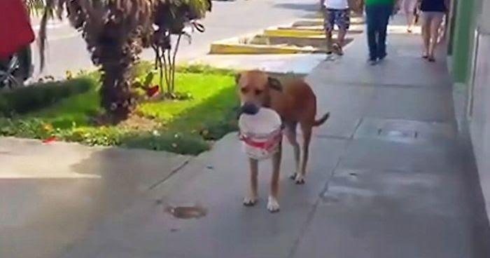 Διψασμένος σκύλος κουβάλαει έναν κουβά και ζητάει νέρο από περαστικούς μετά από την ξηρασία που έπληξε το Περού διψασμένος σκύλος