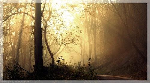 The beautiful morning @ Parambikulam by Venkatraman.M