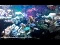 Jalan-jalan ke Seaworld (Ancol)