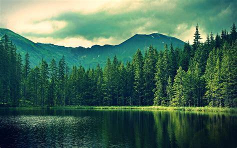 forest pictures wallpaper wallpapersafari