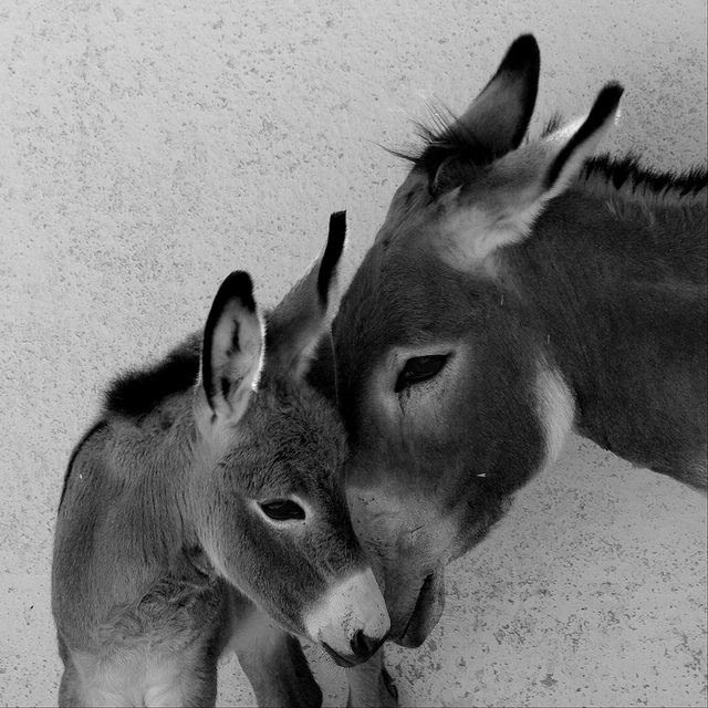 I think donkeys are absolutely one of the cutest animals!! Love them!!