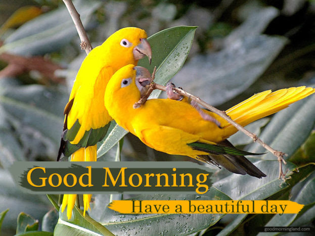 Good Morning Lovely Bird Images Good Morning Images Quotes
