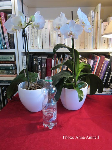 Moisture for orchids by Anna Amnell