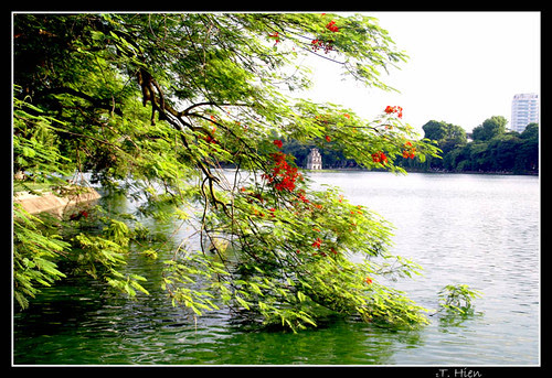 Hồ Gươm cuối mùa hoa phượng