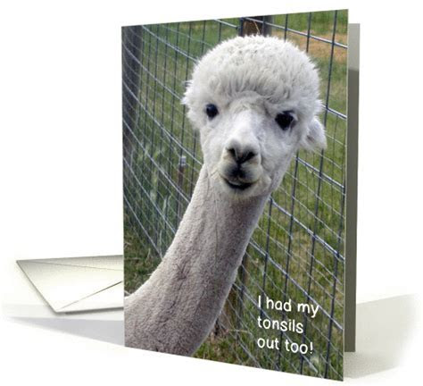 Get Well / Tonsillectomy, Alpaca card (847841)