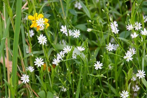 wildflowers near Windermere