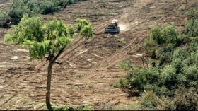 Para Greenpeace, la deforestación causó la inundación