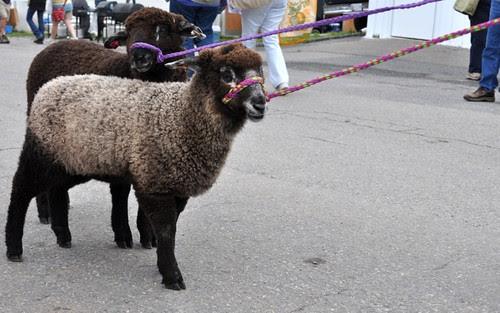 SheepWalk.jpg