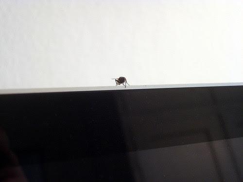 Fliege sitzt
