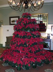 PoinsettiaTree