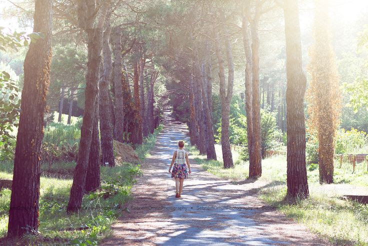 dreamy place/path/forest