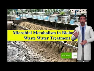 Microbial Metabolism in Biological Waste Water Treatment