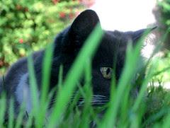Miss Cat, 12 juillet 2005