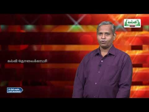 12th zoology பரிணாமம் அலகு 2 பகுதி 2 Kalvi TV