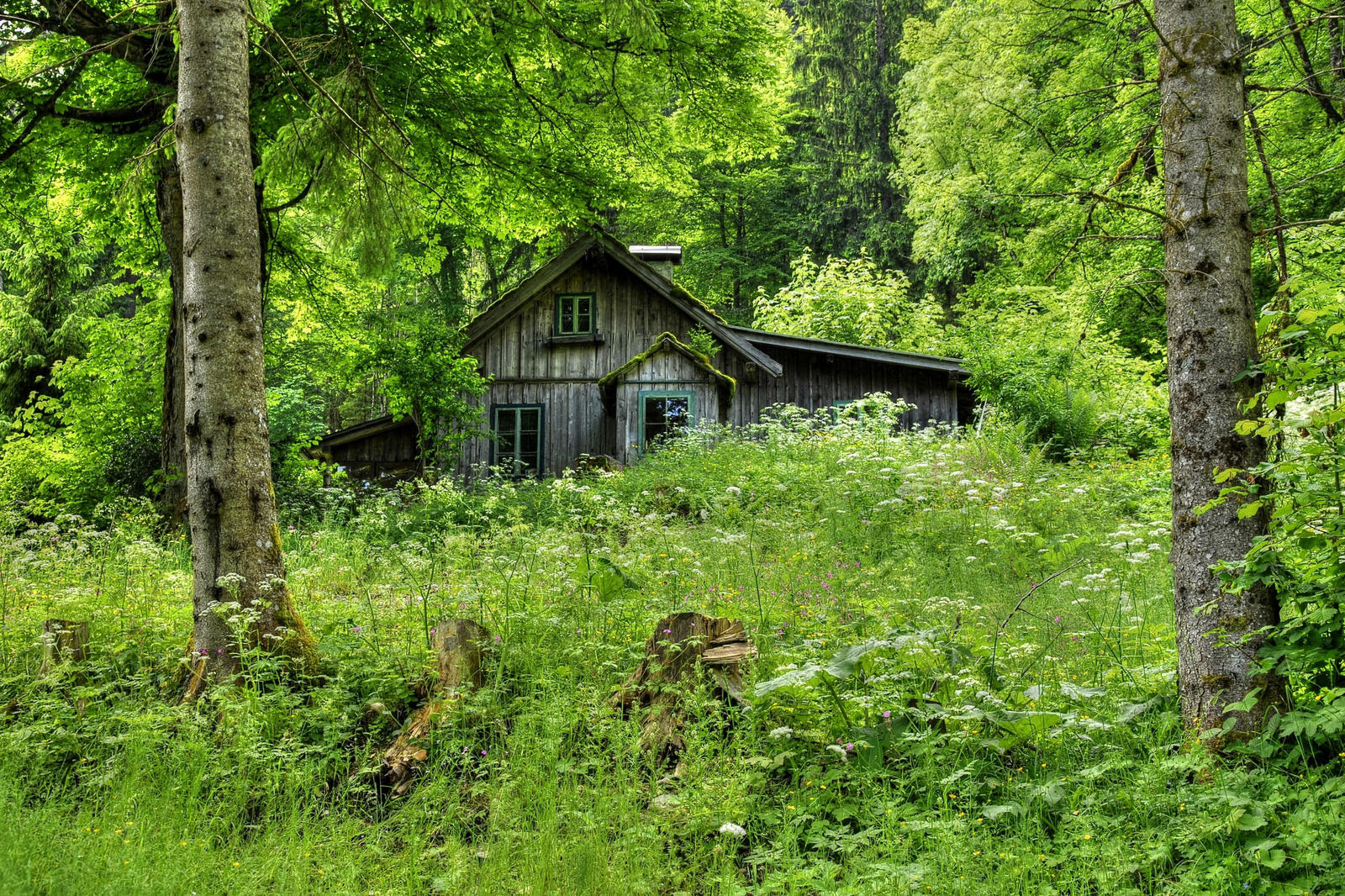 old_forest_home_by_burtn d699dw3