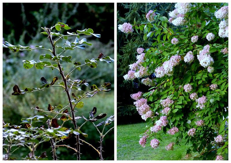 Le jardin après le froid