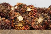 Gubernur Kaltim: Industri Sawit Gantikan Kejayaan Migas dan Tambang
