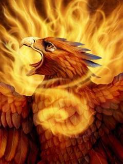 10100+ Gambar Burung Rajawali Api Gratis