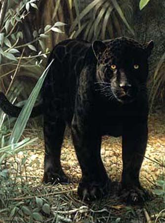 Download 56 Wallpaper Jaguar Hitam Paling Keren