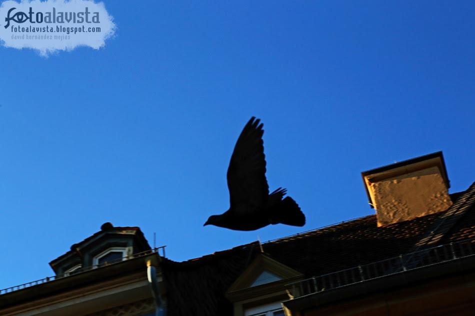 Paloma que vuela en busca de paz