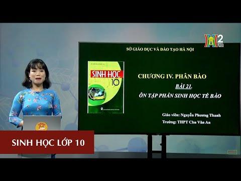 MÔN SINH HỌC - LỚP 10 | Bài 21: Ôn tập phần Sinh học tế bào | 13H30 NGÀY 28.03.2020