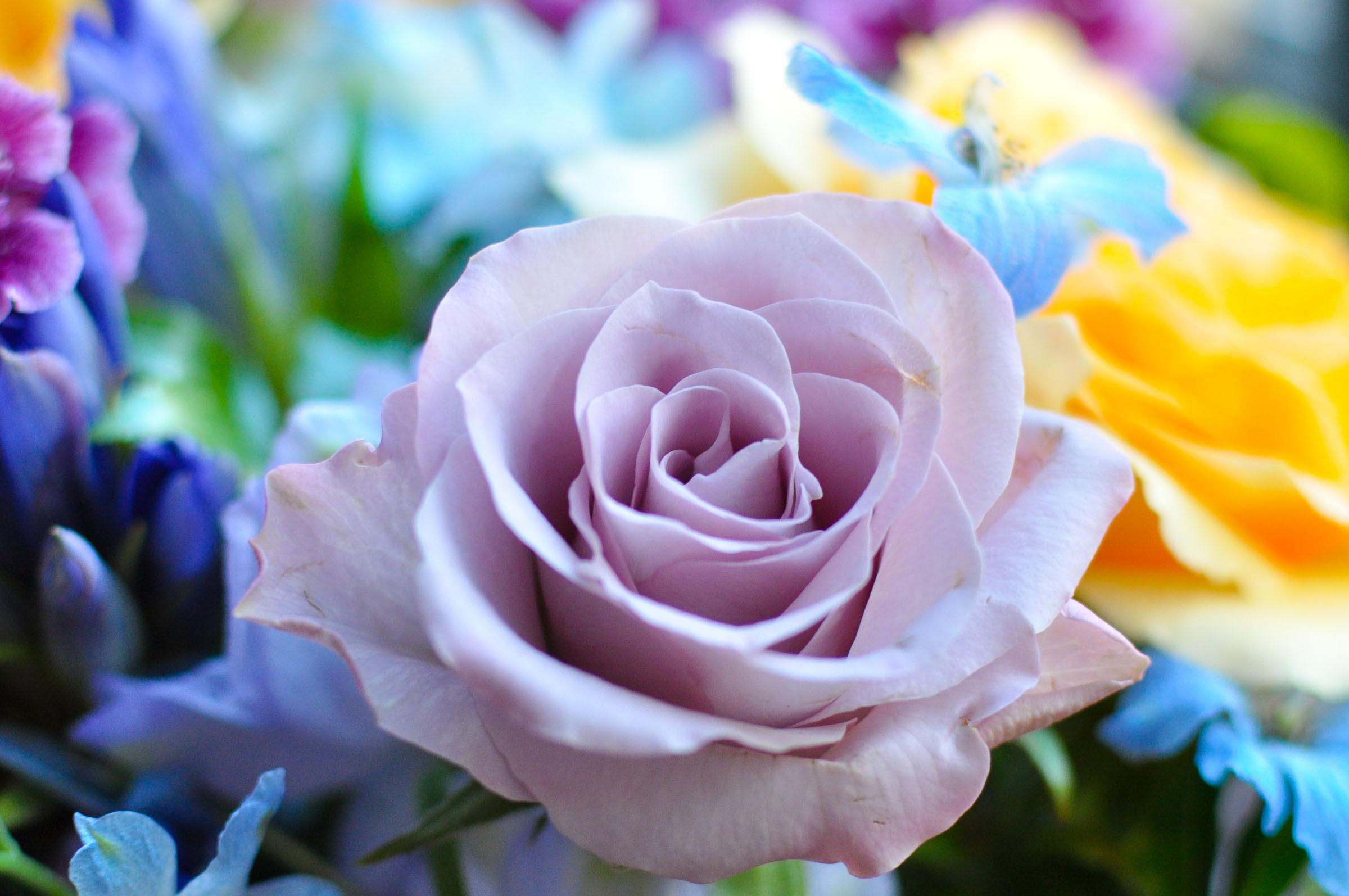 紫色のバラ アレンジメントフラワー花の無料写真素材フリー画像