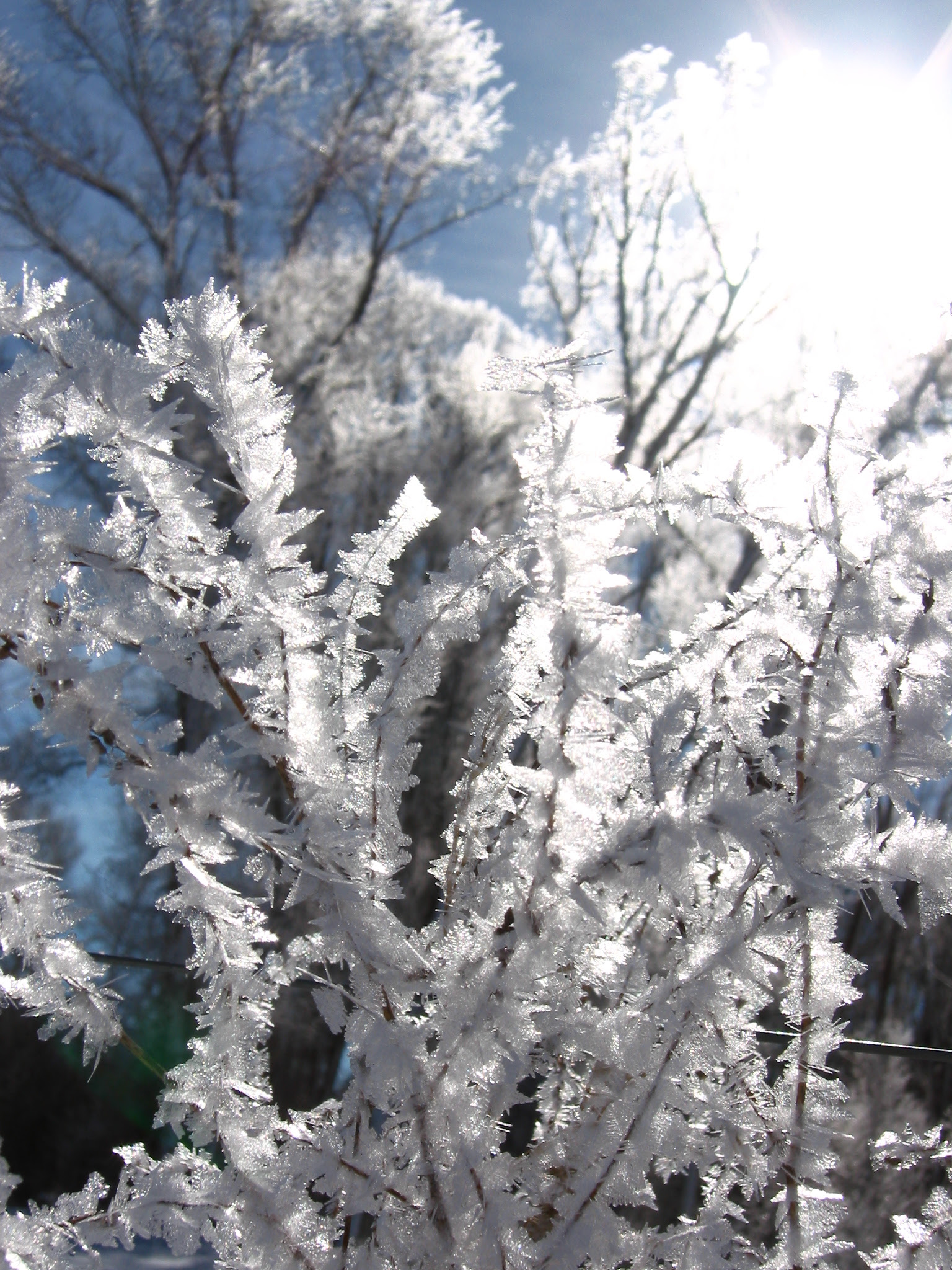 quizzical ice on a branch in Steamboat Colo - soul_amp