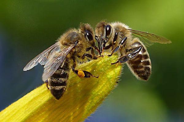 Οι άνθρωποι αγαπούν τις μέλισσες αλλά μισούν τις σφήκες | in.gr