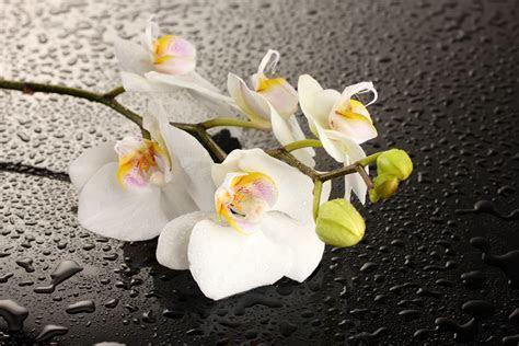 Eine Orchidee wallpaper   AllWallpaper.in #9309   PC   de