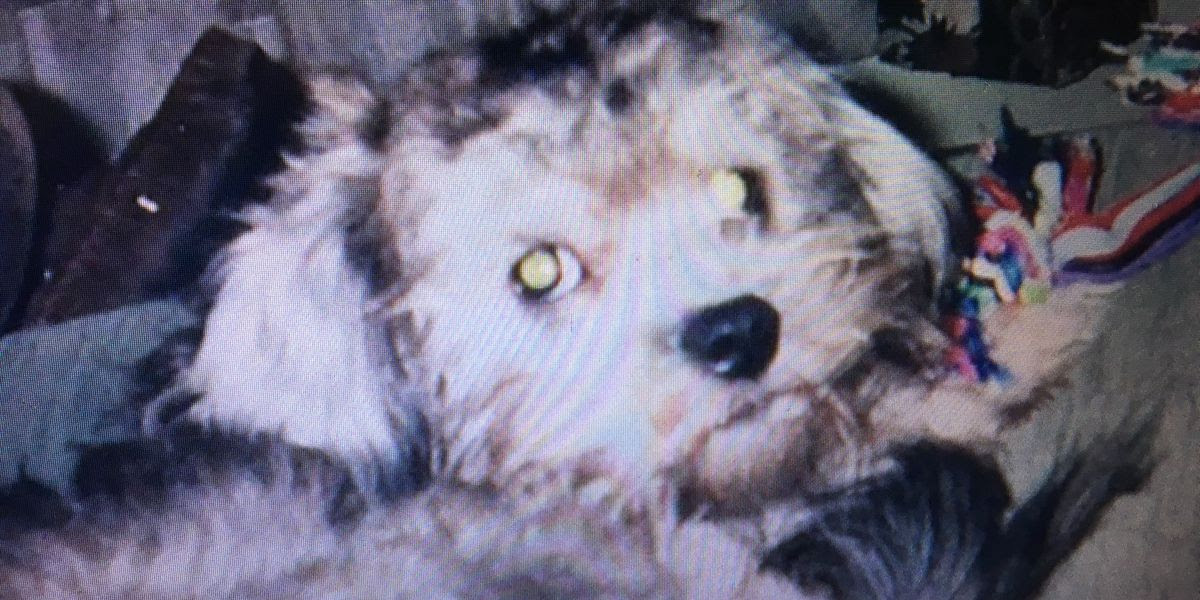 Cleveland family's dog attacked and killed by pit bull