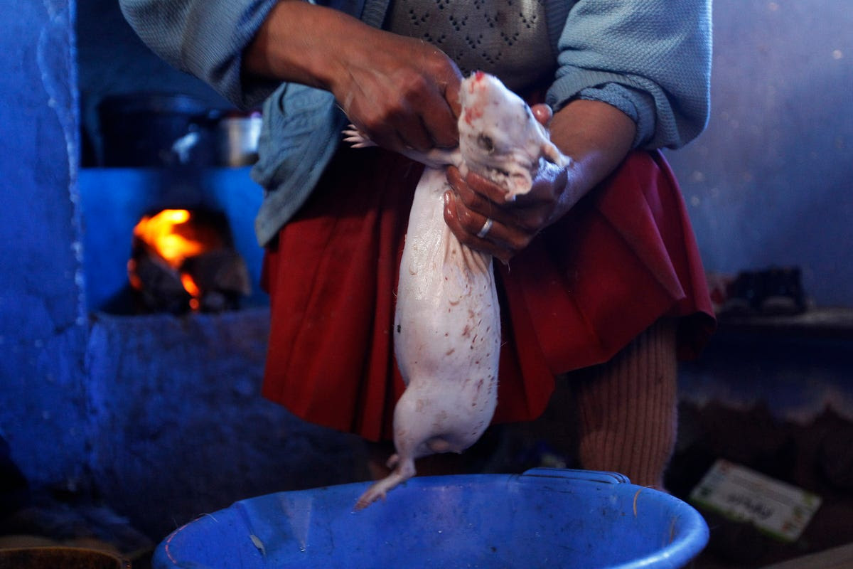 A woman prepares a guinea pig for cooking in Langui, Peru. Guinea pigs are a delicacy in many parts of South America.