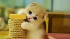 Kucing Lucu 30 Detik