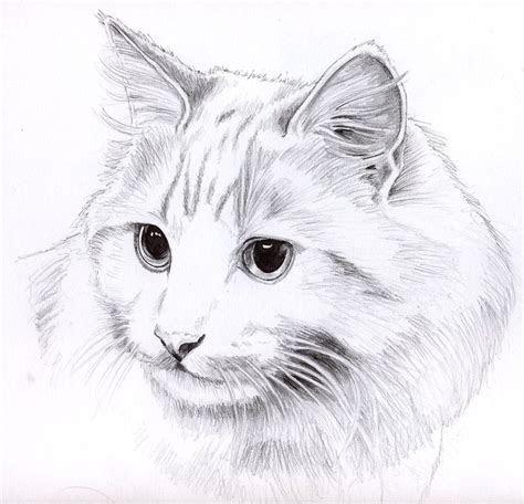 pencil cat portrait  kingzoidlord  deviantart