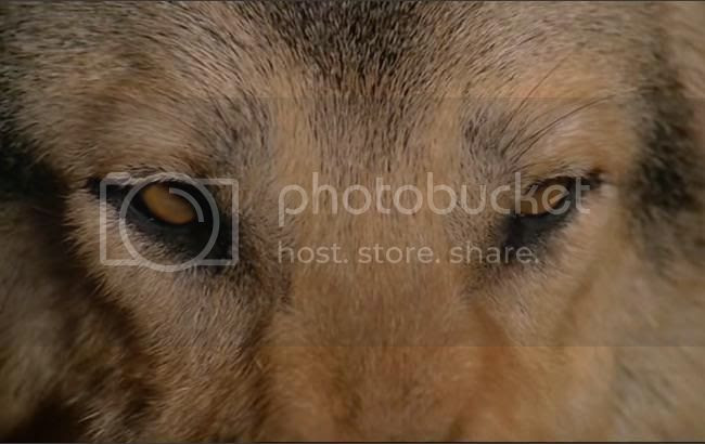 photo les_chiens-07.jpg