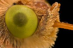 Moth at High Mag series 1-4