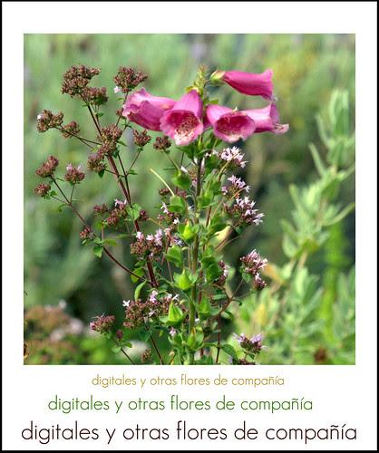 digitales y otras flores de compañía