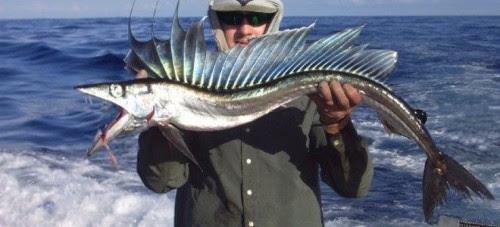 ψάρι-κανίβαλος-τρομοκρατεί-τις-ΗΠΑ