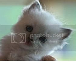 Kitty Face! Pictures, Images and Photos