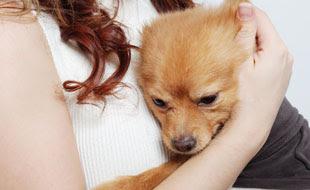 Animali da compagnia: come abituare il cane a restare da solo