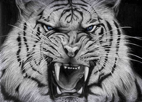 cool white tigers wallpaper background animals