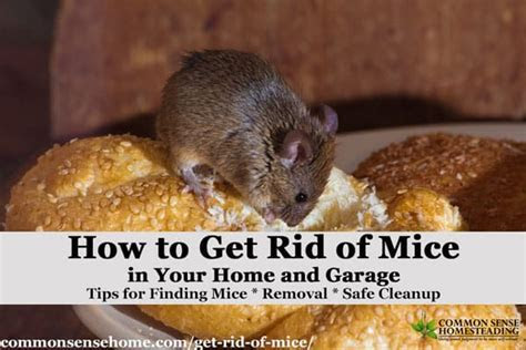 The Best Ways to Get Rid of Mice in Your House and Garage   Total Survival